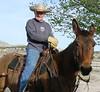 Horses & Livestock : Buckskin Butts Make us Nuts!